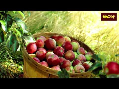 сорта яблонь с фото колоновидных