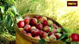 Колоновидные яблони(Колоновидные яблони новые сорта и агротехника., 2016-03-14T14:55:44.000Z)