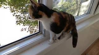 Кошка Мотя очень сильно боится улицы