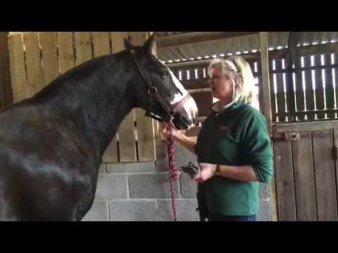 How to hog a mane using a Lister Liberty and a Liveryman Classic Trimmer
