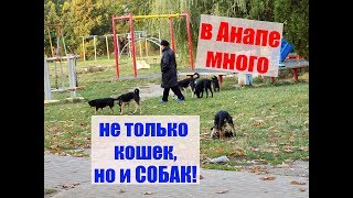 Анапский двор у школы № 7. Много собак!Anapa at the yard of school No. 7. A lot of dogs!