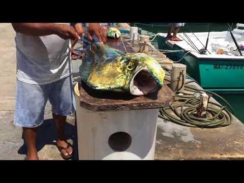 Fishing @ Puerto Aventuras / Riviera Maya