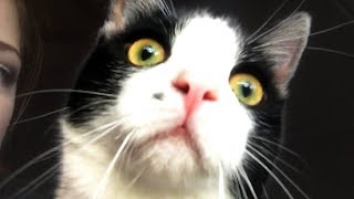 CUTE AND FUNNY CAT VIDEOS TO START YOUR 2020! 🐱
