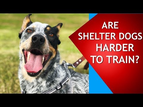Are Shelter Dogs Harder to Train? Watch This Video to Find Out!