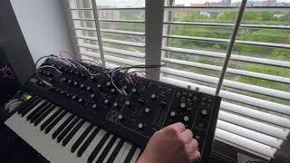 Moog Matriarch - Black - Spring 2020