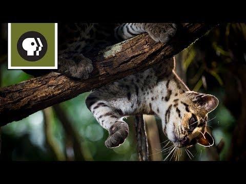 Loài Mèo Có Khả Năng Bước Đi Theo Chiều Thẳng Đứng
