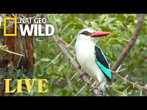 Safari Live - Day 71 | Nat Geo WILD