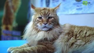 Международная выставка котов в Днепре