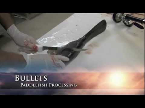 Home Processing Of Paddlefish