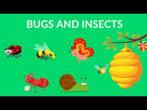 Bugs and Insects for Kindergarten, Preschool and Junior kids
