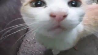Спасибо вам одинокие кошки за ваше искреннее Мяу
