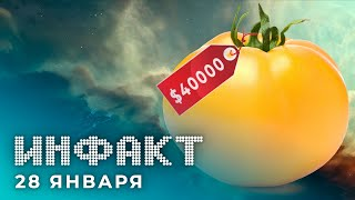 Новый герой Apex Legends, Корабль за $40000 в EVE Online, анонс Torchlight III, Ghost in the Shell…