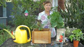 How to Plant Bush Cucumbers : Garden Space