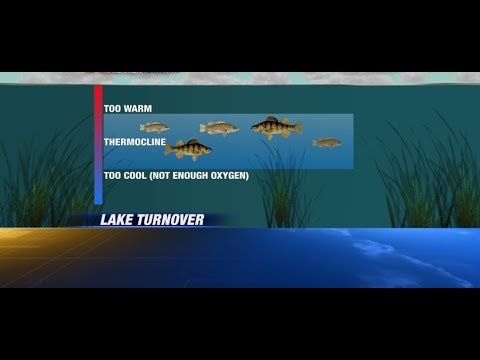 Catch More Fish! Fishing the Thermocline: What is it?