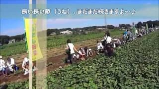 ドローンの空撮映像で2016.10.2に行われた「世界一のいも掘りまつり」の...