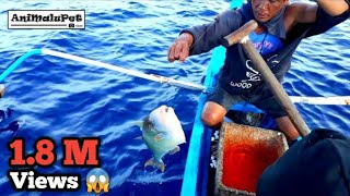 Surigao Palangre Fishing Catch GIANT TITAN TRIGGERFISH or Papakol Catch and Cook