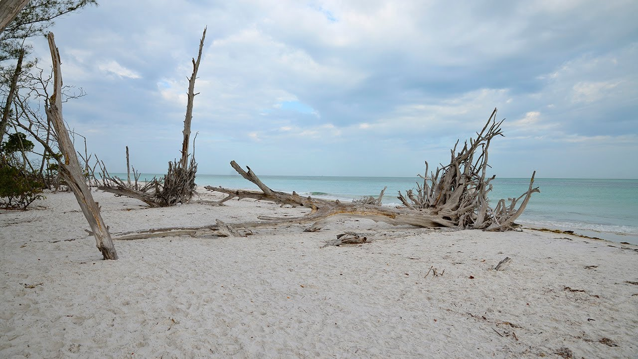 Driftwood Beach Longboat Key Florida