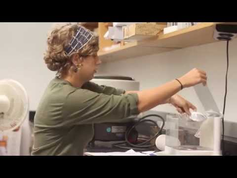 A Day in the Life | Undergraduate Researcher Carrie Hamilton