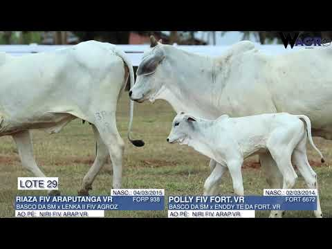 LOTE 29   FORT 6672,FORP 938