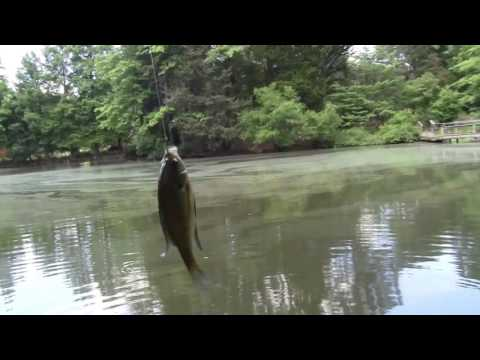 Repeat Homemade Bluegill Bait by royboy1993 - You2Repeat