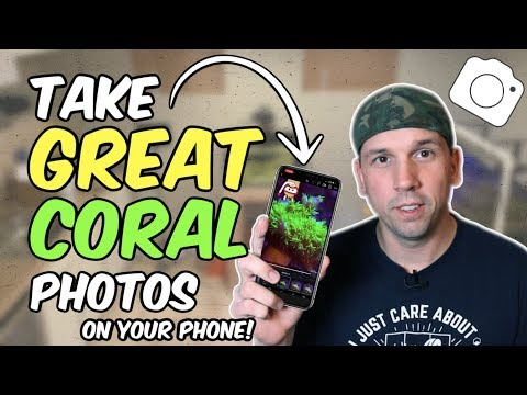 How To Take Better Photos Of Coral With Your Phone