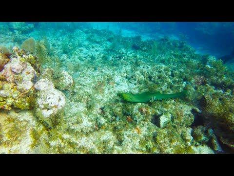Scuba Diving in The Florida Keys at John Pennekamp Coral Reef State Park, Key Largo