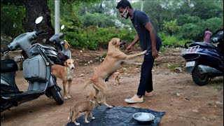 Street mother dog asking please provide food for my family  Dogoftheday