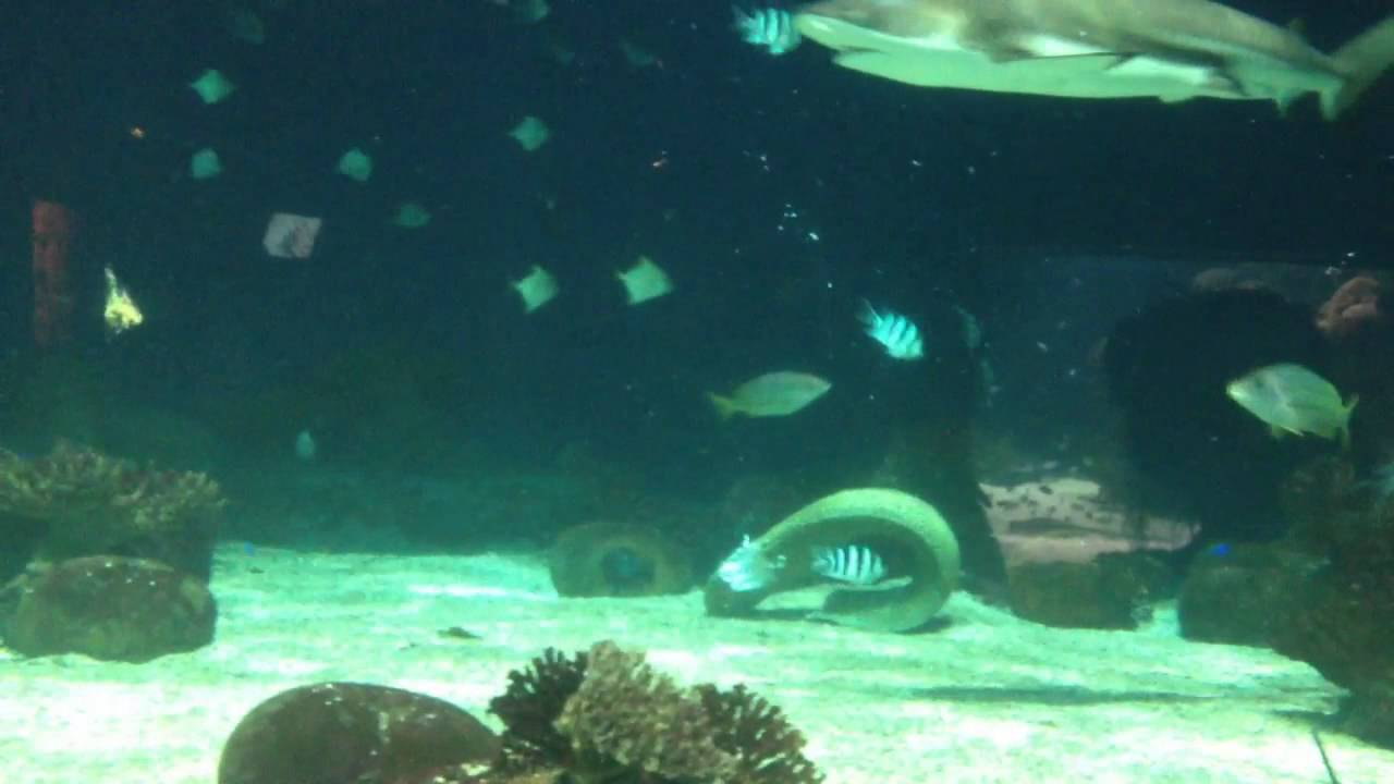 Vancouver Aquarium Sharks Killing Eel 29 12 2013 Part 1 Youtube