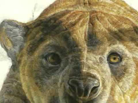 Marsupial Lion Tribute