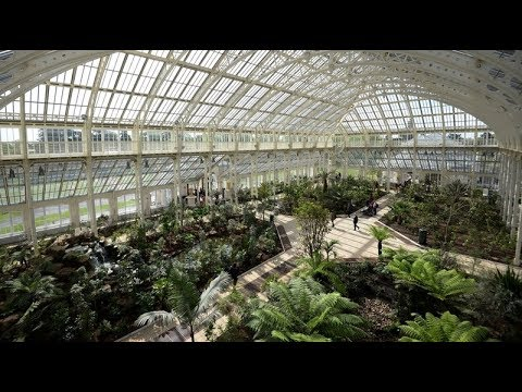 World's largest Victorian glasshouse reopens at Kew | ITV News