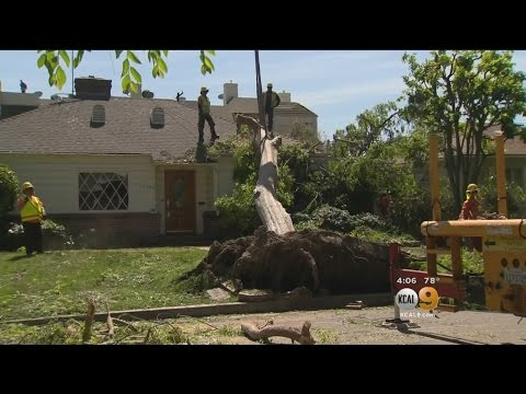Crews Remove Tree That Crashed Into Valley Village Home