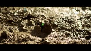 Однажды в лесу (2013) — трейлер на русском