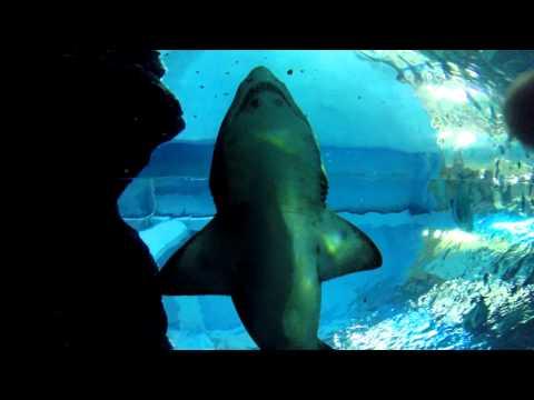 Siam Ocean World (Bangkok Aquarium) www.aquawiadomosci.pl