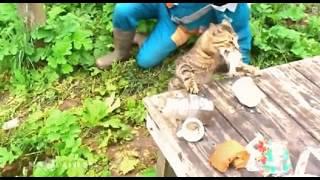 Кот ждал рыбу больше всех