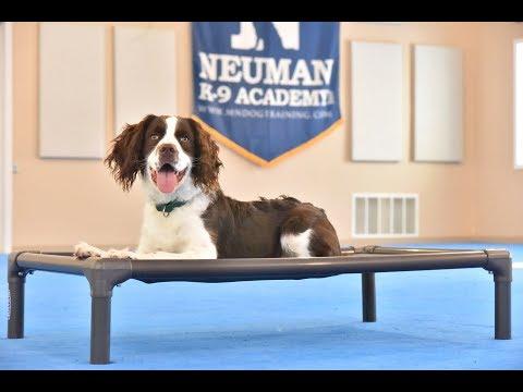 Griffin (English Springer Spaniel) Boot Camp Dog Training Video Demonstration