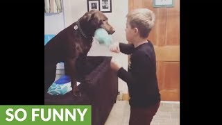 Dog acts as personal speed bag for boy's boxing training