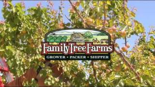 Apricots From Family Tree Farms