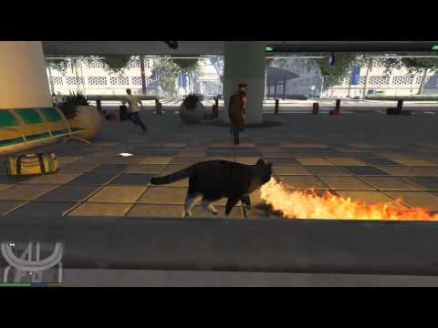 gta 5 fire cat funny compilation 001   youtube