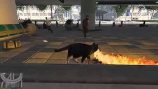 GTA 5 Fire Cat Funny Compilation #001