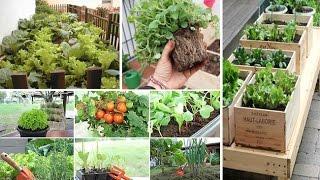 Como Fazer uma Horta no Espaço de Tua Casa