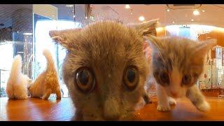 360°Cat 子猫360° @pet shop