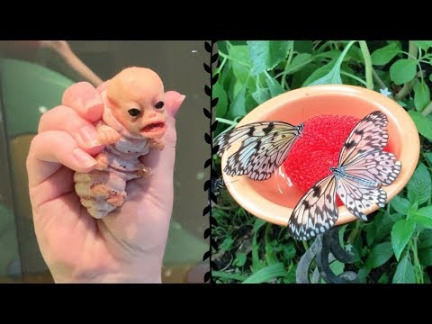 Our Alien Caterpillar Creature Went To The Butterfly Museum!