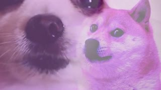 Amazing Doggo Compilation (but also with Memes) (WOW) thumbnail