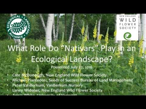 What Role Do Nativars Play in the Ecological Landscape Part 1 of 2