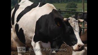 Будни животноводов