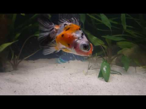 Unboxing Live Fish In The Mail From Coast Gem USA