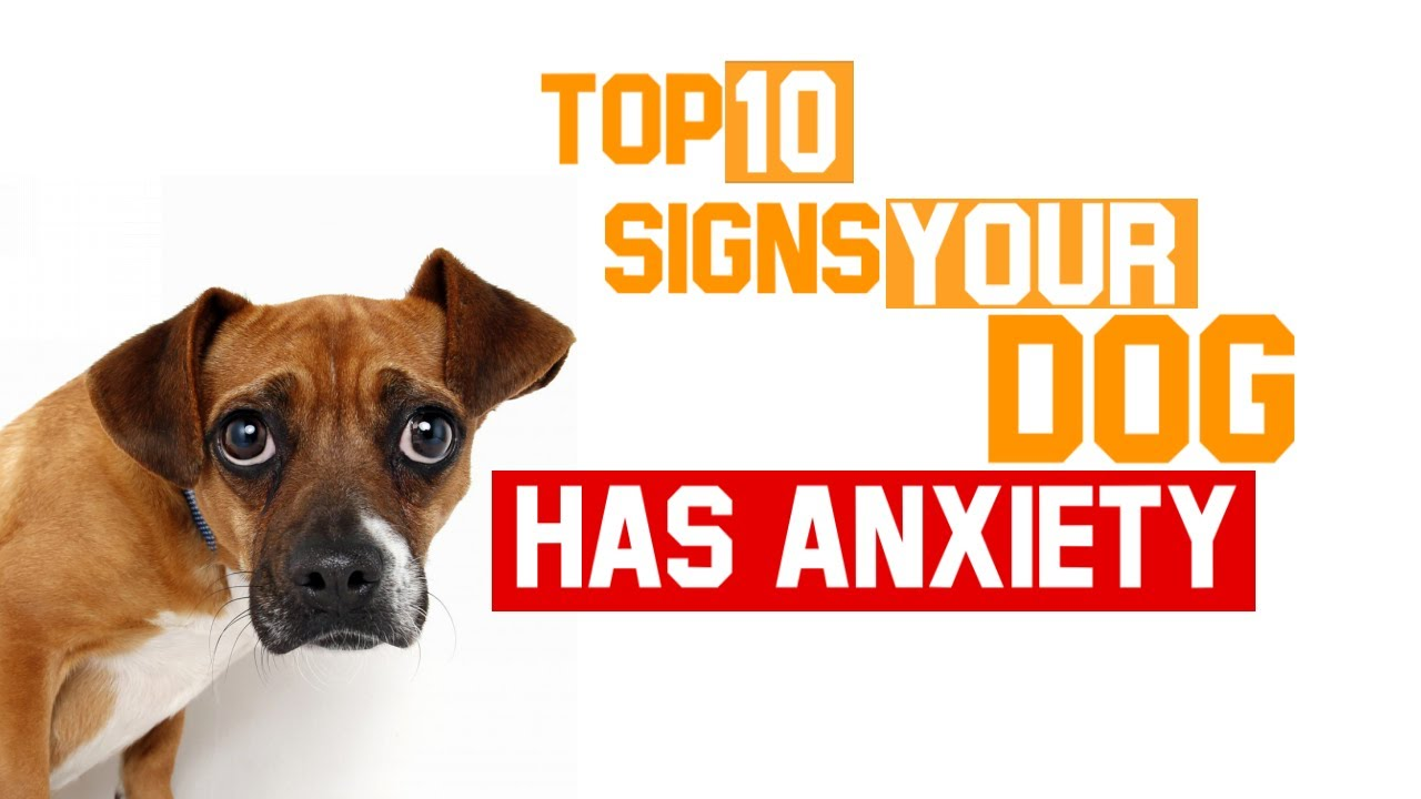 Download Top Ten Signs Your Dog Has Anxiety Issues