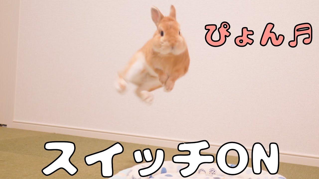 ONとOFFの切り替えが激しすぎるウサギさん【No.312】