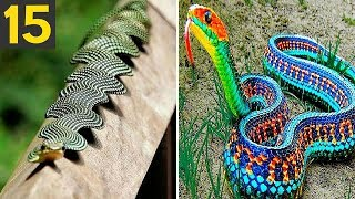 15 RAREST and FREAKY Snakes