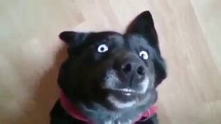 Твои глаза новый клип Светланы Лободы